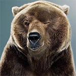 Medvědovi